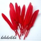 bulu-merah