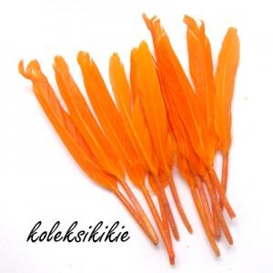bulu-orange