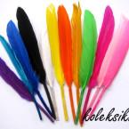 bulu-warna-warni